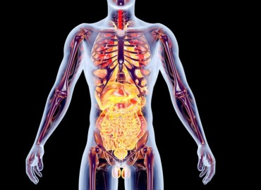 Диагностика и Восстановление внутренних органов.