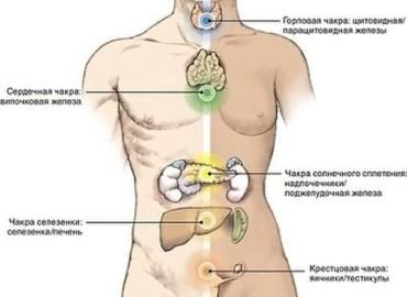 Энергетическая связь чакр с органами
