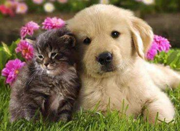 Присутствие животного в доме способствует росту жизненной силы, благоприятно влияет  на ауру человека и ауру дома. Очищение биополя домашнего животного.