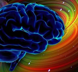 5 фактов о мозге…